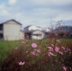 Yashima, Japan. Rolleiflex. 2014. Kodak E100G Expired.