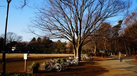 三鷹 井の頭公園