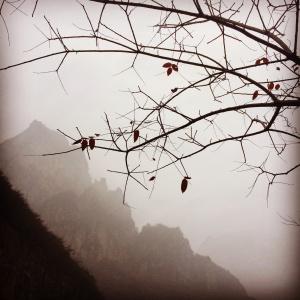泉瀑峽紅葉